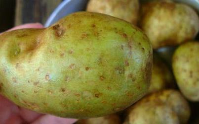 تحذير من مادة السولانين الموجودة في البطاطا gf78jS.jpg