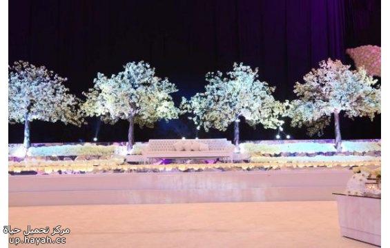 بالصور افكار لتصميم كوشة العروس 3dFbgjh.jpg